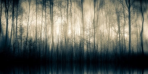 Forest Whispers by Alain Devolye
